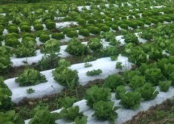 Salaty_Organichni