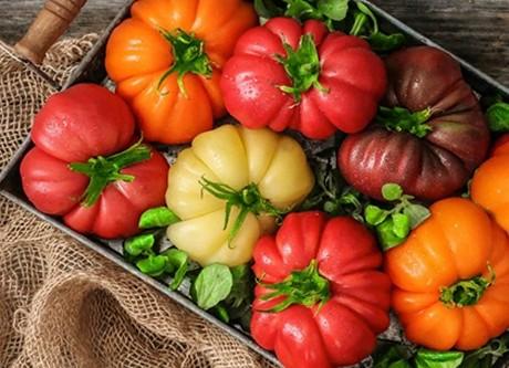Tomat-Monteroza