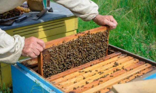 beekeeper-696x465