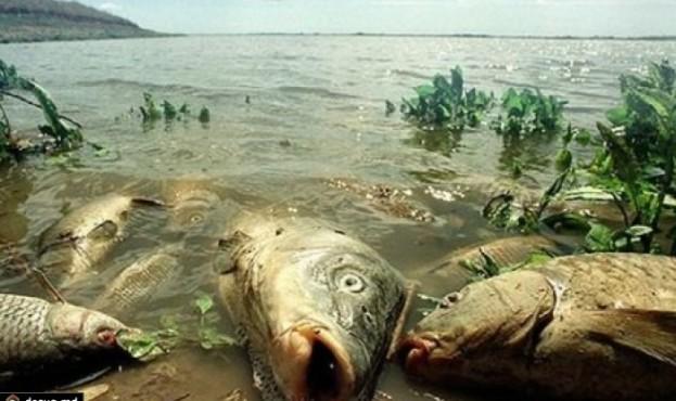 mertvaya-ryiba-vsplyila-na-poverhnost-gi