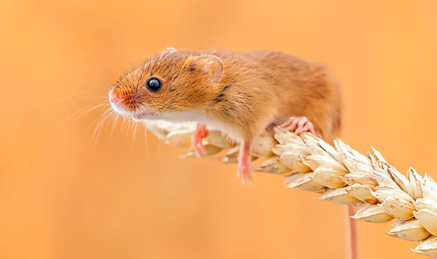 mouse_3