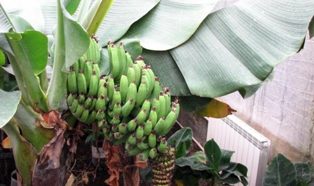 Ekskursiya-na-bananovu-fermu