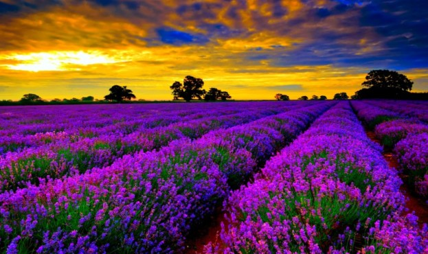 Lavender-Fields-sky-www.tourismprofile.com--973x500