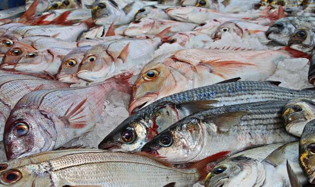 fish-1617442_1920