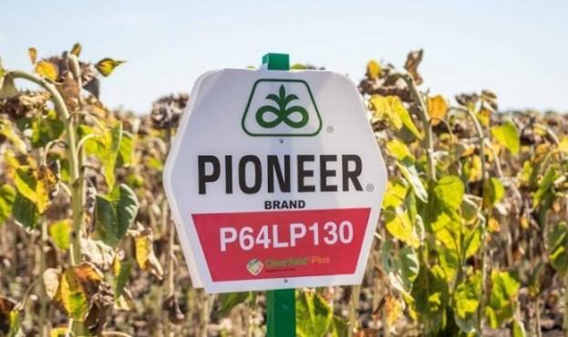 pioneer-kurkul-41127