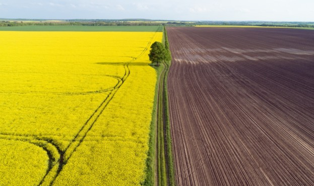 Divided landscape with yellow rape and brown soil