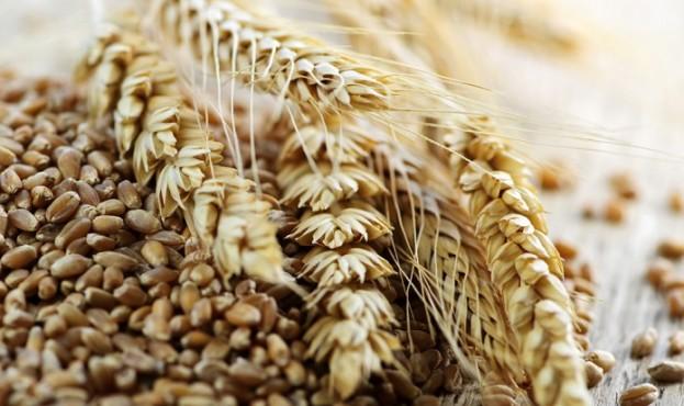4911ded-2011f29-wheat5