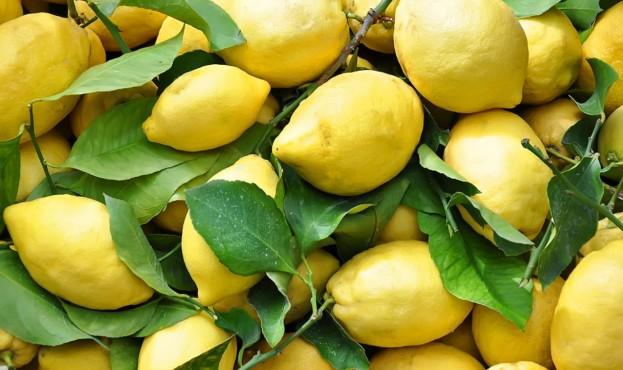 5c0530c46592c-limoni
