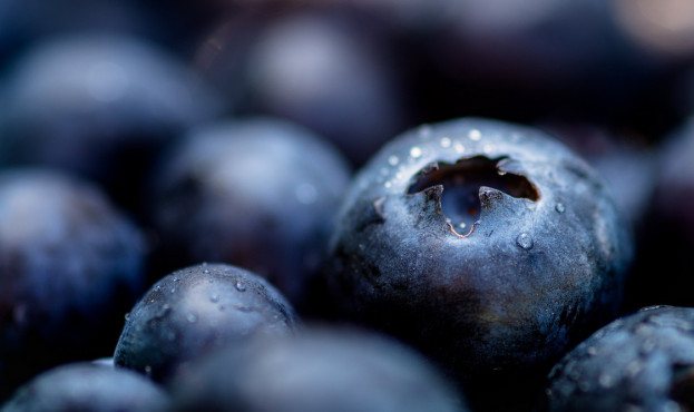 blue-berries-3432295_1920