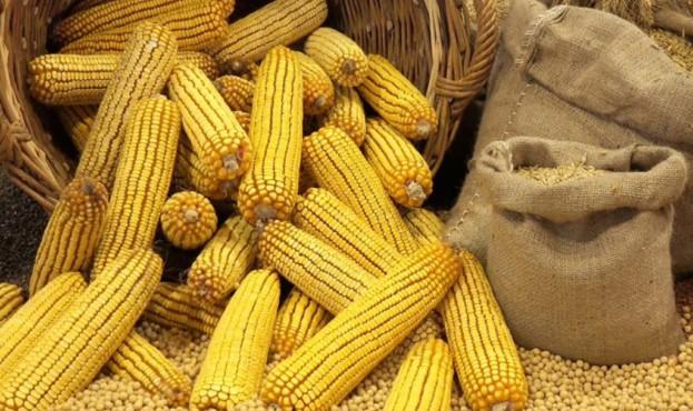 кукуруза-1024x670