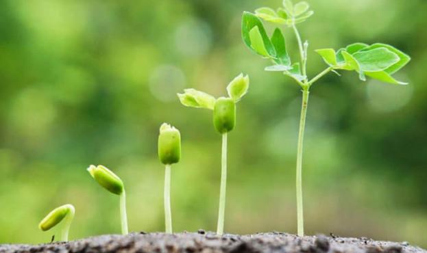 plants-growing-696x442-Вчені-виділяють-гриби-які-можуть-стимулювати-ріст-рослин-навіть-в-умовах-меншої-кількості-води