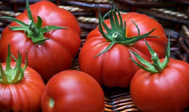 veliki_tomati