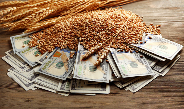 Dollar banknotes and wheat grains on wooden background. Agricultural income concept