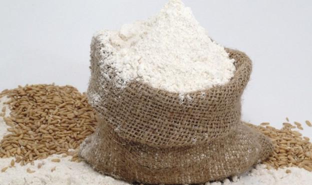 export of flour