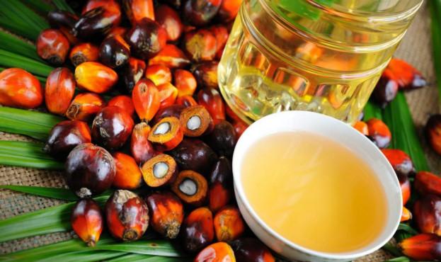 пальмова-олія-1024x682