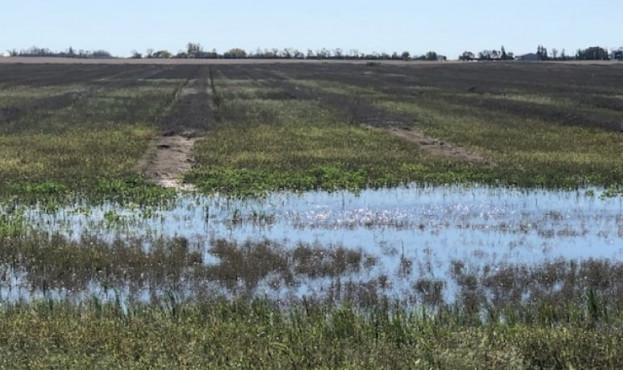rain-drench-farmer-s-fields