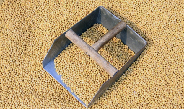 piles of soybean in the market, closeup of photo