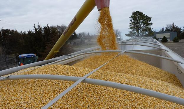 93cee21-corn1-623x370