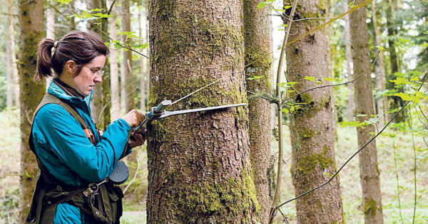 Національна-інвентарізація-лісів-1-e1562837538646