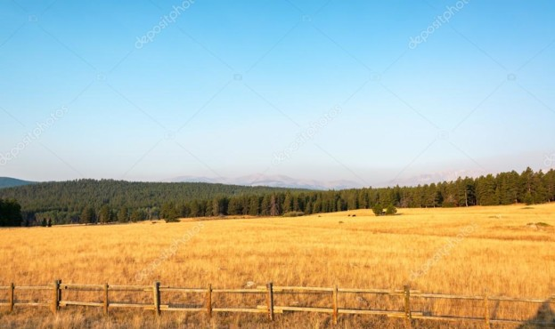 depositphotos_98950840-stock-photo-field-and-forest (1)