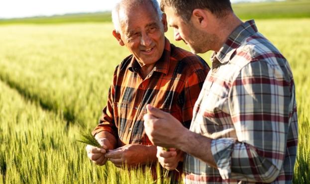 фермери-пшениця