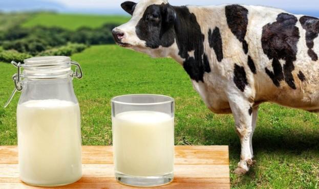 _109895866_milkcow
