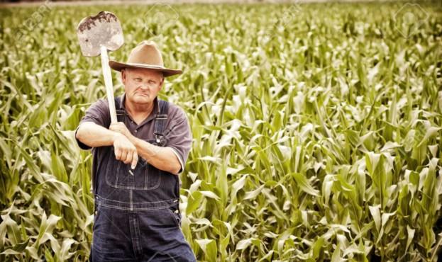 14346023-ヴィンテージ古い農家、トウモロコシ畑で