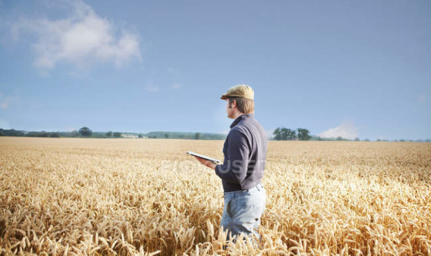 focused_165478514-stock-photo-farmer-using-tablet-computer-field