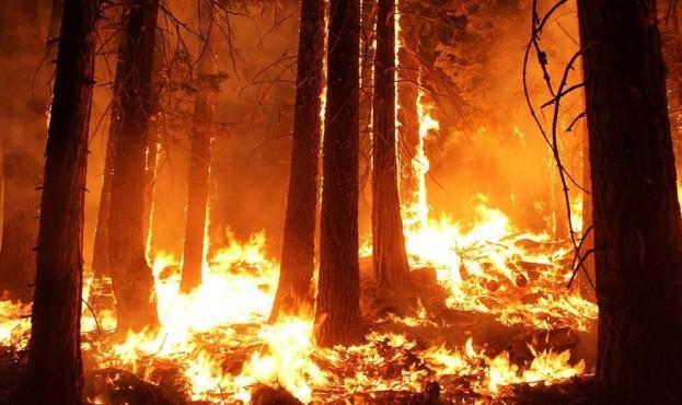 wildfire-1105209_960_720-960x480