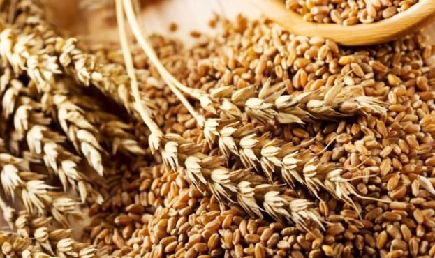 зерно-1