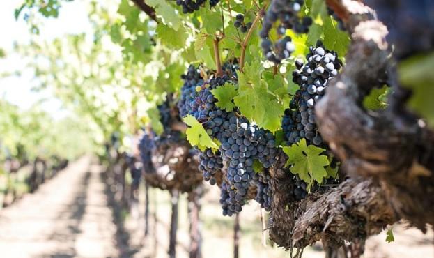 grapes-1952073_960_720-7287