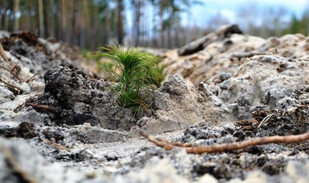 ліс_садити