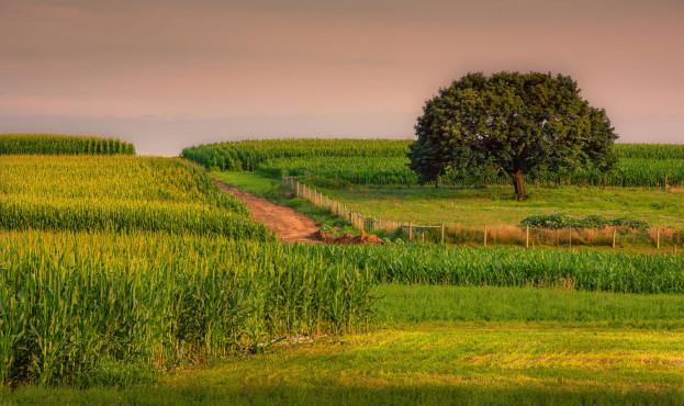 pennsylvania-amish-corn-fields-stan-dzugan