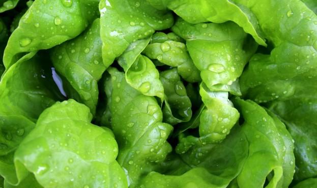 salad-771056_1280