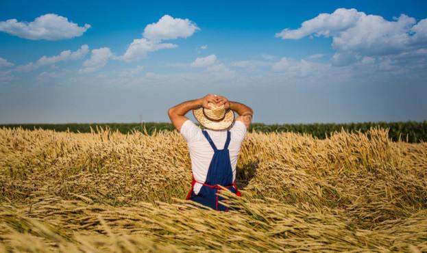 фермер-в-по-е-31903074