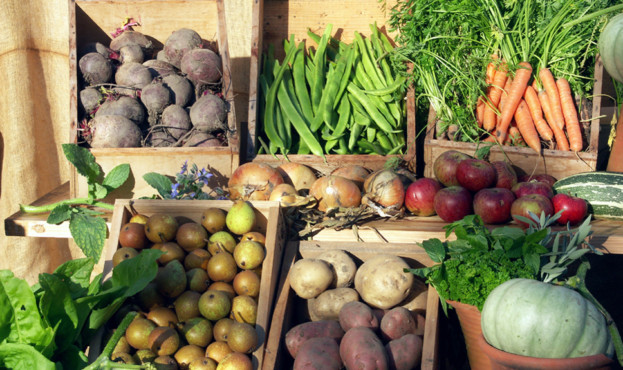 harvest-produce