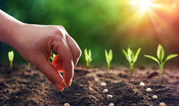 planting-sowing-seeds_si