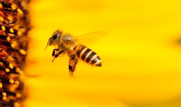 bee--26747