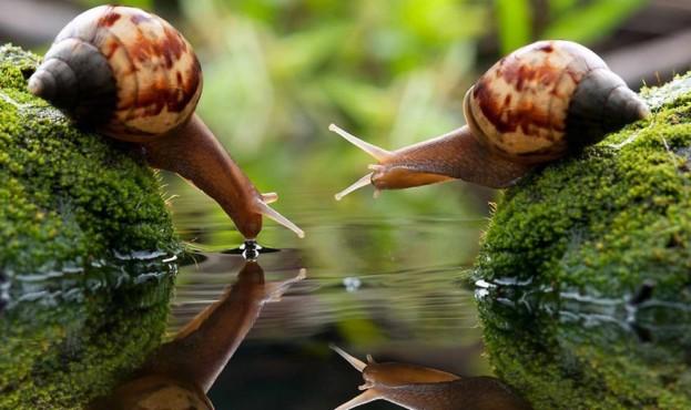 picture_snails_1258_p0
