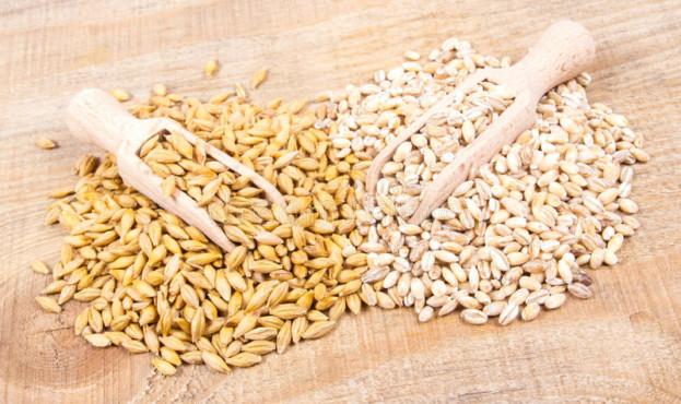 зерно-ячменя-и-и-семена-и-ячмень-жемчуга-91104885