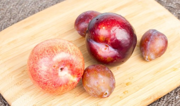 Pluot, plum and prunes on wood cutting board.
