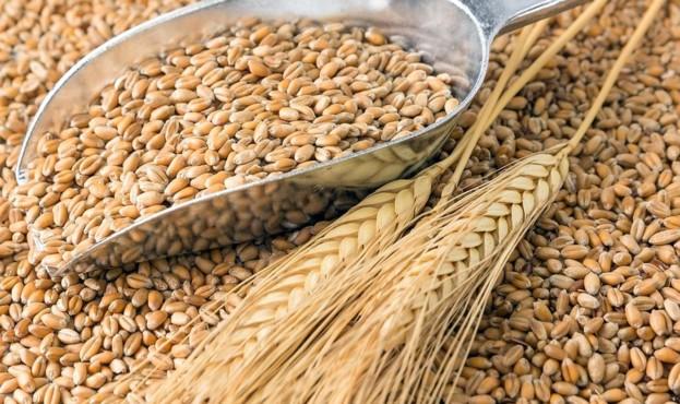 weizenkoerner-wheat-grains-by-stockpics-fotolia-78750746