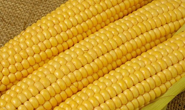 Frozen_Yellow_Sweet_Corn_Kernel_Noodle_Flour_Meal-4372