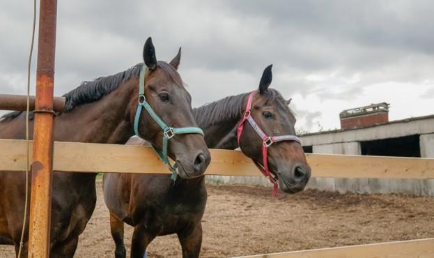 horse-3557958_1280
