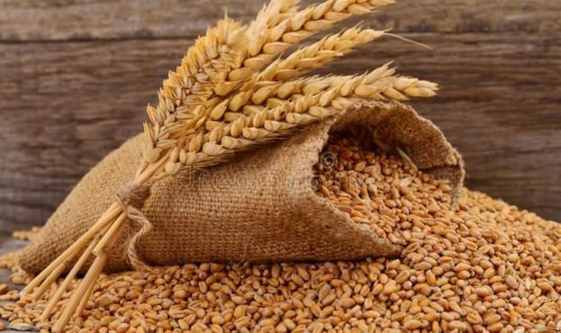 мешок-с-зерном-и-ухо-пшеницы-на-белой-предпосылке-144741923