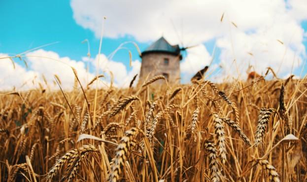 wheat_3572942_1280