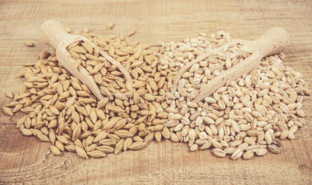зерно-ячменя-и-и-семена-и-ячмень-жемчуга-92400041