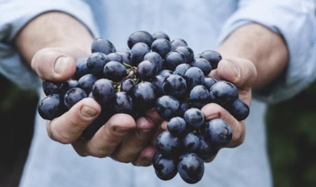 Screenshot виноград