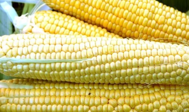 1709-f1-semena-lark-seeds-4