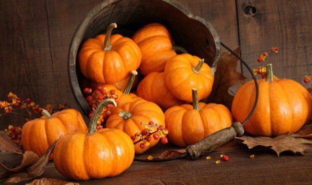 Wooden bucket filled with tiny pumpkins